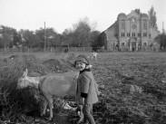 1943, Régi Fóti út, a Rákospalotai zsinagóga, 15. kerület