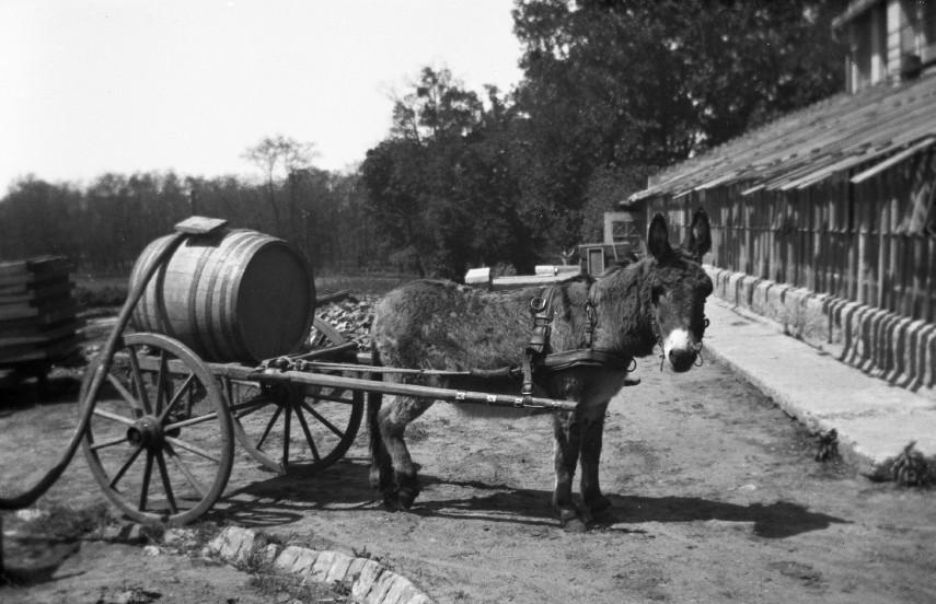 1940, Boros-szamár